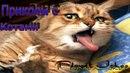 Смешные коты.Приколы с котами.Смешные видео про котов.