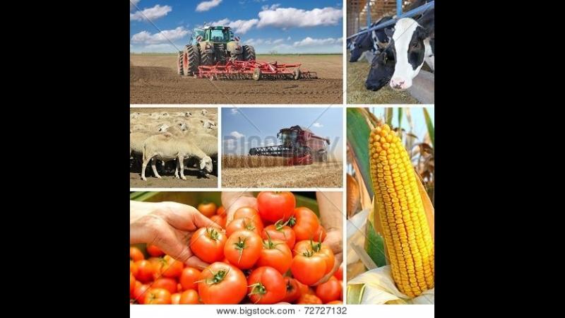 Сельское хозяйство России в рейдерском захвате