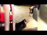 ты не пройдеш!  прикол с кошками и собаками!!))