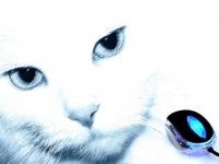 Животные.  Кот и мышь.