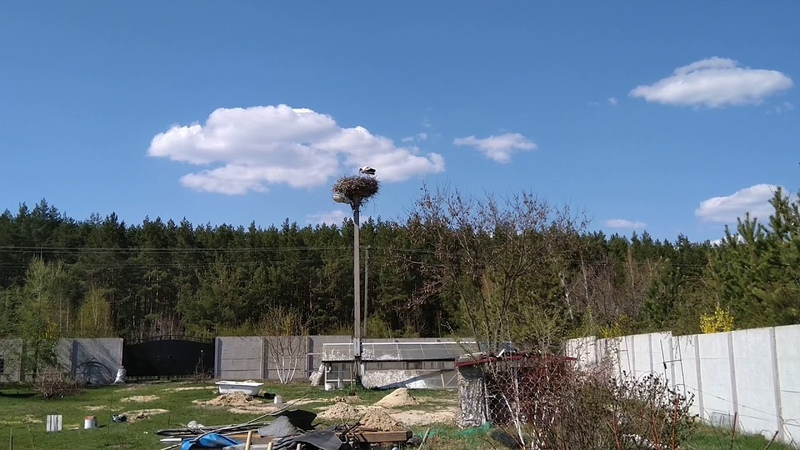 аисты свили гнездо у коллеги на участке