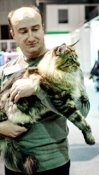 Евсеенко Сергей и кот Кабальеро