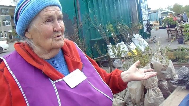 В весеннем саду и на рынке саженцев - Валерий Железов
