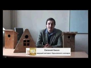 Как правильно делать домики для птиц