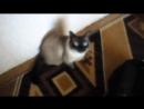 поющий кот Филипп