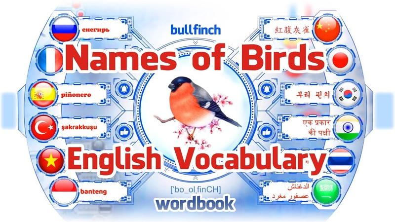 Bài học Tên của các loài chim | Học từ vựng tiếng Anh với hình ảnh | Sách từ