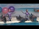 Шоу в дельфинарии Коктебеля. Отдых и развлечения в Крыму / веб одитинг по скайпу