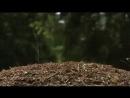 Кислотная атака муравьев Как они защищают свой дом