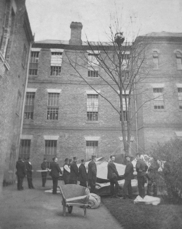 Работники психбольницы ждут, когда пациент спустится с дерева. Лондон, 1895.