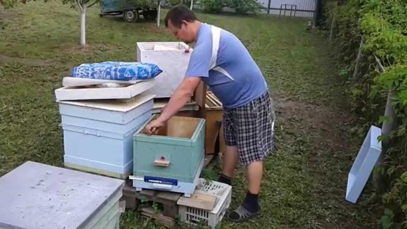 Пересадка пчелиной семейки из нуклеуса в улей