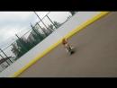 Собака на скейте (бигль Бася продолжает тренироваться😉😍)