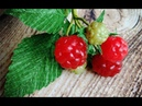 ABC TV | How To Make Raspberry Fruit - Craft Tutorial