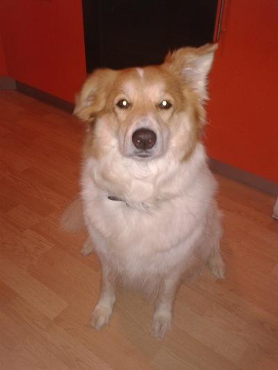 Лора Лора, 1 декабря 1997, Челябинск, id135675710
