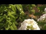 Птичка колибри в Башкирии
