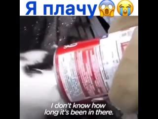 Девушка не прошла мимо и помогла котёнку, который засунул голову в банку
