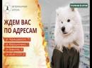 Комбинезоны для собак от ветеринарных отделов Губернские аптеки