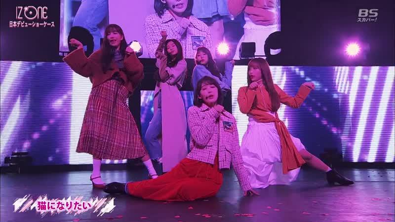 190206 IZ*ONE Japan Debut Showcase. IZONE (아이즈원) - Neko Ni Naritai