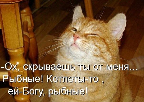 Сама по себе гулёна (о кошках) - Страница 3 4wj9xpdcIRE