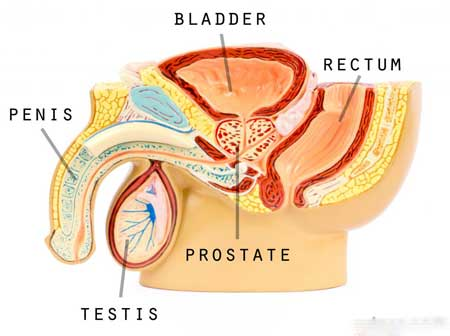 Плетизмография полового члена обычно используется для обнаружения изменений в объеме - главным образом, кровотока - к половому члену.