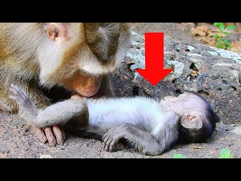 Please Don't Cry After Watching This Video, Pity Baby Monkey Lori Do Like This