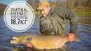 Ловля лосося в Литве Нерис Трофейный лосось Lašiša Neris Рыбалка в Калининграде KÖNIGFISHING