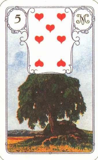 5. Дерево  MHsq1fEwMUo