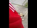 Me and my pug beagle dog puggle the fuggzy