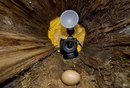 Воровка яиц