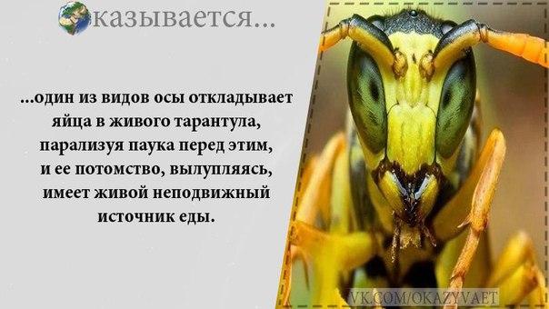 https://pp.vk.me/c543105/v543105022/21ea8/m1tNghORho0.jpg