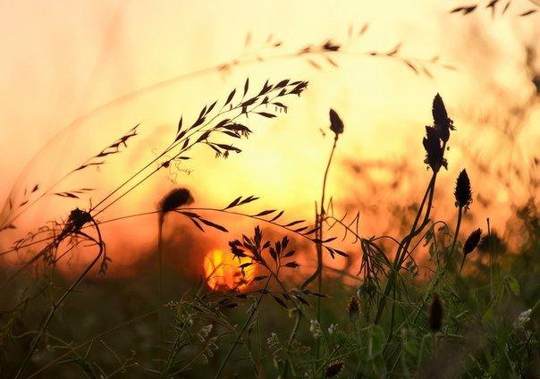 В молодом человеке горит огонь, в старом человеке светит свет. Надо уметь, пока горит огонь  гореть; но когда прошло время горения  суметь быть светом. Надо в какой-то момент жизни быть силой, а в какой-то момент быть тишиной.