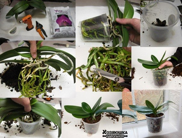 Как ухаживать за орхидеями в домашних условиях  639