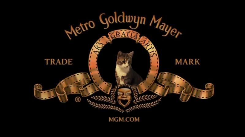 Metro Goldwyn Mayer INTRO w_ my cat