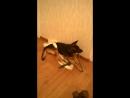 Кстати, Ляля научила Валерика играть с палочками!