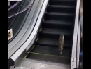 Котэ на эскалаторе