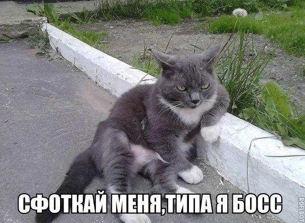 http://cs322316.vk.me/v322316104/4765/bzojuO1IFbo.jpg