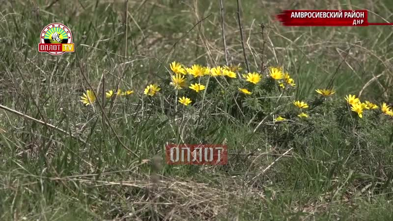 Амвросиевский р н ДНР На карте ДНР появится новый заповедный объект