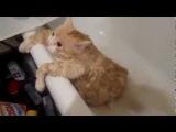 Смешной ПРИКОЛ   Толстый кот не может вылести с ванны