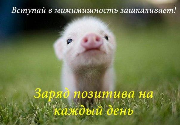 милые аватарки в вк:
