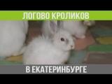 Логово кроликов в Екатеринбурге