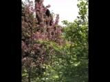 Максим Галкин показал роскошный сад в их с Аллой Пугачевой замке