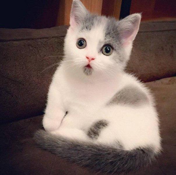 Котенок, который всегда удивлен.