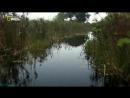 «Хищники Африки: Идеальные убийцы» (Познавательный, природа, животные, 2011)
