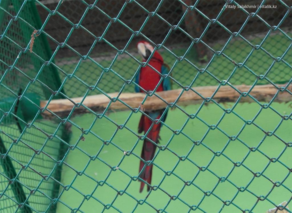 Красный попугай, зоопарк Алматы