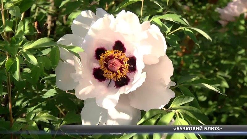 У ботанічному саду влаштували благодійну акцію «Бузковий блюз»