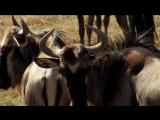 Природа и музыка Африка (Видеорелакс, путешествие, 2009)