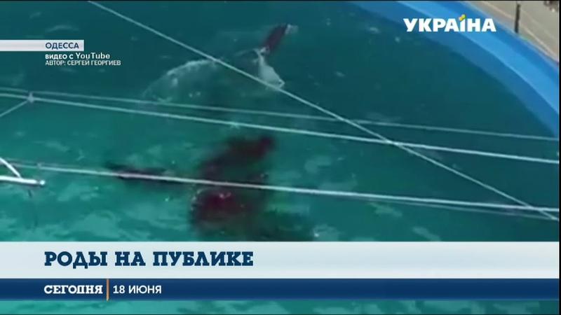 В Одессе во время шоу родился дельфиненок