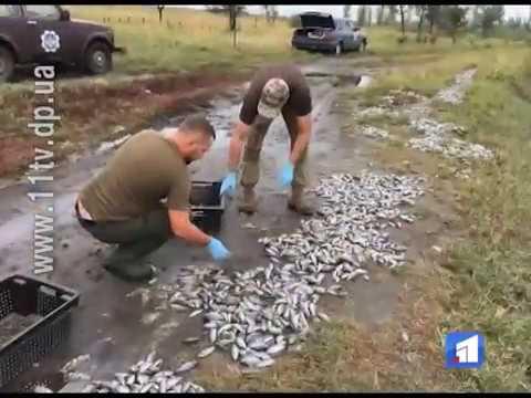 Понад півтори тонни мертвої риби знайшли неподалік селища Соснівка