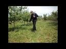 обрабатуем сад гирбыцыдами от сорняков