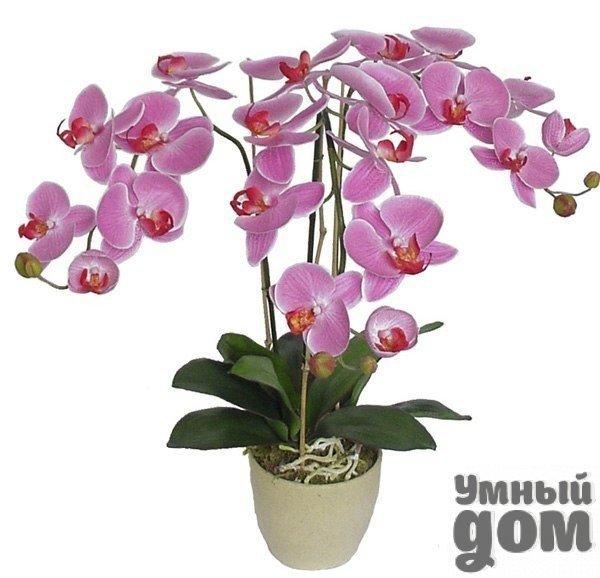 Все, что Вы хотели бы знать о комнатных растениях! Присоединяйтесь:)  ➨ Секреты цветения. Орхидея  ➨ Что это за растение?  ➨ Что вы выращиваете дома?