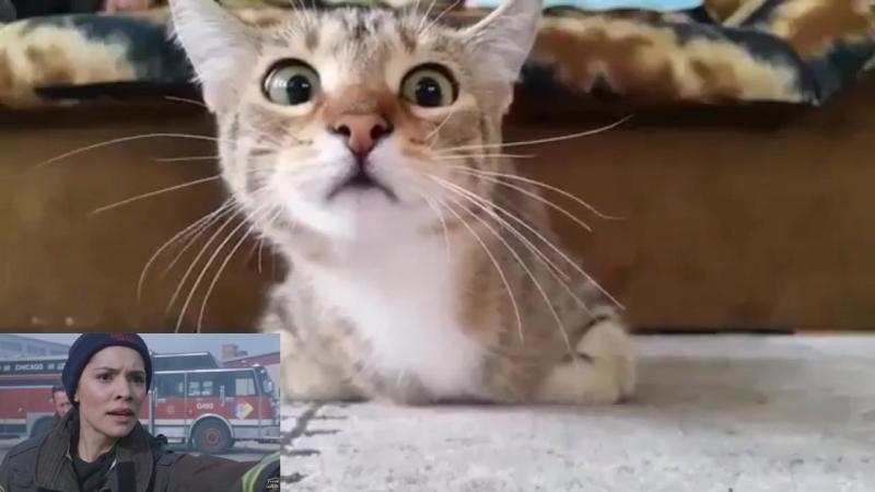 Кот смотрит Пожарные Чикаго. Сильные переживания